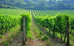 Wineyards toscanos Fotografía de archivo
