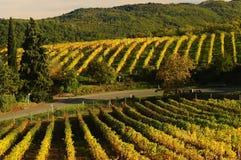 Wineyards in Toskana, Chianti, Italien stockfoto