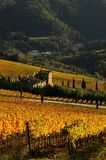 Wineyards in Tuscany, Chianti, Italy. Wineyards in Tuscany, vinegrapes, and leaves vine. Chianti region, in Tuscany, Italy royalty free stock image