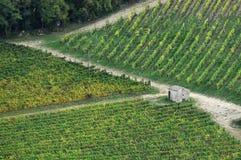 Wineyards in Tuscany, Chianti, Italy. Wineyards in Tuscany, vinegrapes, and leaves vine. Chianti region, in Tuscany, Italy stock photo