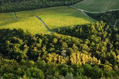 Wineyards in Tuscany, Chianti, Italy. Wineyards in Tuscany, vinegrapes, and leaves vine. Chianti region, in Tuscany, Italy stock image