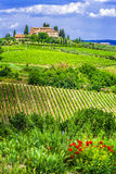 Wineyards of Tuscany, Italy royalty free stock photo