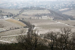 Wineyards Royalty Free Stock Image