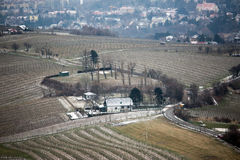 Wineyards Royalty Free Stock Photo