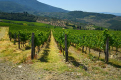 Wineyards vert en Toscane, chianti, Italie photos libres de droits