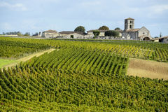 Wineyards von Saint Emilion, Bordeaux-Weinberge Lizenzfreie Stockfotos