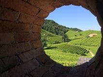 Wineyards w Prosecco Zdjęcia Stock