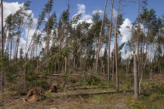 Winfall im Wald Lizenzfreies Stockbild