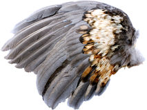 Wing royalty free stock photos