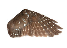 Wing of the bird Stock Image