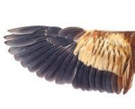 Wing bird Stock Photo