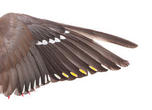 Wing of the Bohemian Waxwing Stock Photos