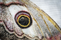 Wing butterfly closeup. A wing of butterfly emperor moth closeup Royalty Free Stock Photos