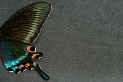 Wing of butterfly royalty free stock photography