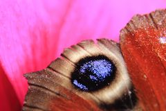 Wing of butterfly Royalty Free Stock Images