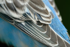 Wing detail. A close up shot of a wing Royalty Free Stock Image