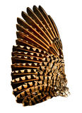 Wing of Flicker Bird. Full wing of flicker bird. Related to the woodpecker family stock photography