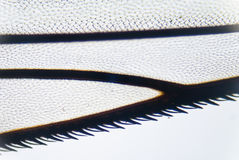 Wing of a fly Stock Images
