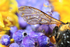Wing of insect Royalty Free Stock Image