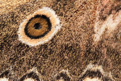 Wing of a moth Stock Photos