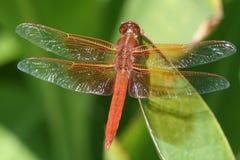 wing słońce zdjęcie stock