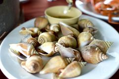 Wing shell. Amazing sea food with wing shell Royalty Free Stock Image