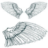 Wing sketch Royalty Free Stock Image