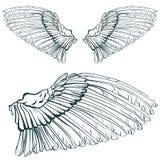 wing sketch stock illustration