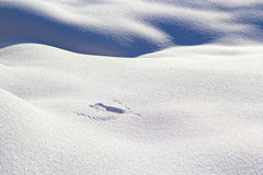 Wing Traces On The Snow. Royalty Free Stock Photo