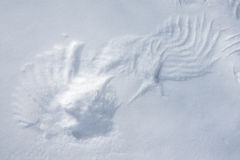 Wing traces on the snow. Signs of birds' heavy activity Royalty Free Stock Photo