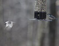 On the Wing--Wild Bird in Flight Stock Photos