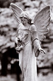 Winged angel. Series of Cemetery Angels and monuments from New Orleans and Houston Royalty Free Stock Images