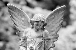 Winged angel. Close-up of a winged angel with solemn look Stock Images
