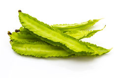 Winged bean Royalty Free Stock Images