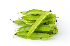 Winged bean Royalty Free Stock Photo