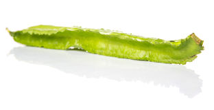 Winged Bean Vegetable III Stock Images