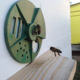 Winged bee slowly flies to beehive collect nectar for honey on private apiary from flower stock image