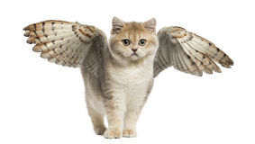 Winged cat Royalty Free Stock Photography