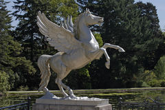Winged Horse Stock Photography