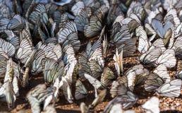 Winged magic. Stock Photo