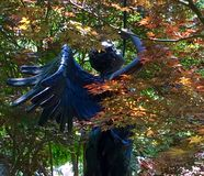 Winged metal angel. Dappled sunlight & partially obscured by trees; a bronze winged angel blowing her horn. Dallas Texas Stock Photography