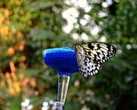 Winged Schönheit Stockfotografie