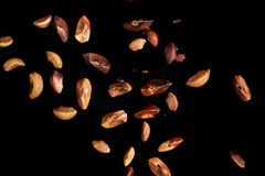 The winged seed Stock Images