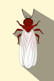 Winged Termite Royalty Free Stock Images