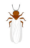 Winged Termite Insect. Vector Illustration Royalty Free Stock Photos