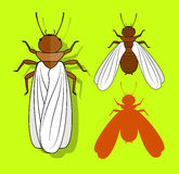 Winged Termite Insects Stock Image