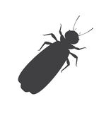 Winged Termite Silhouette Stock Photo