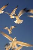 Winging αυτό Στοκ Εικόνα