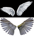 Wings. White  wings of an angel on a black background Stock Photos