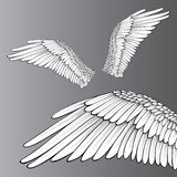 Wings. (Realistic Illustration / Design Elements Stock Images
